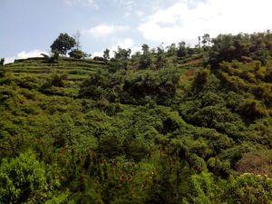 Lembah di Wisata Alam Katumiri