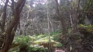 Hutan di Kawah Putih