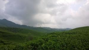 Suasana kebun teh sebelum di Naringgul